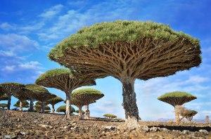 arbres11